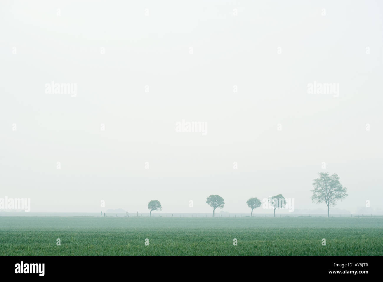 Line of trees in foggy landscape - Stock Image