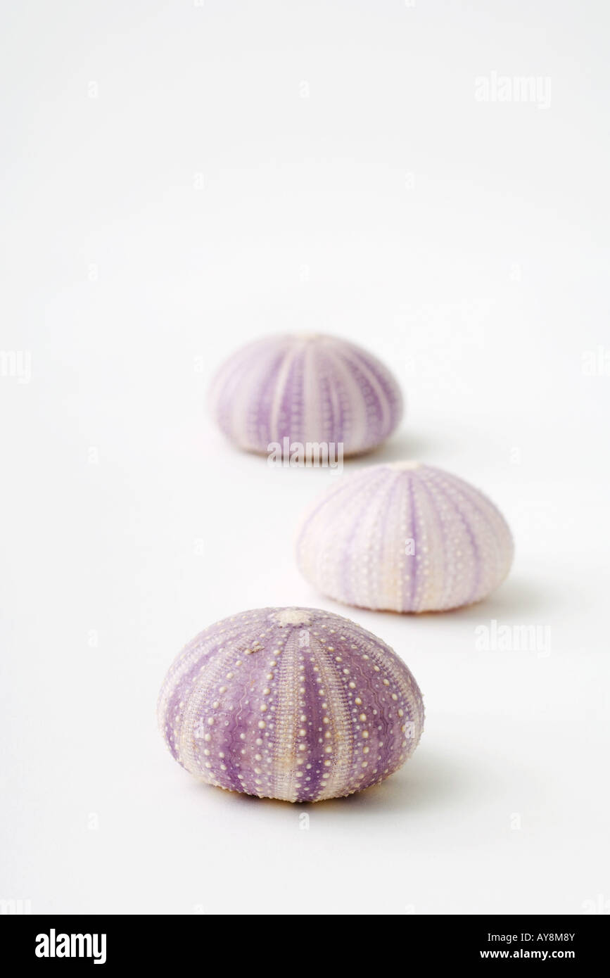 Sea urchins shells - Stock Image