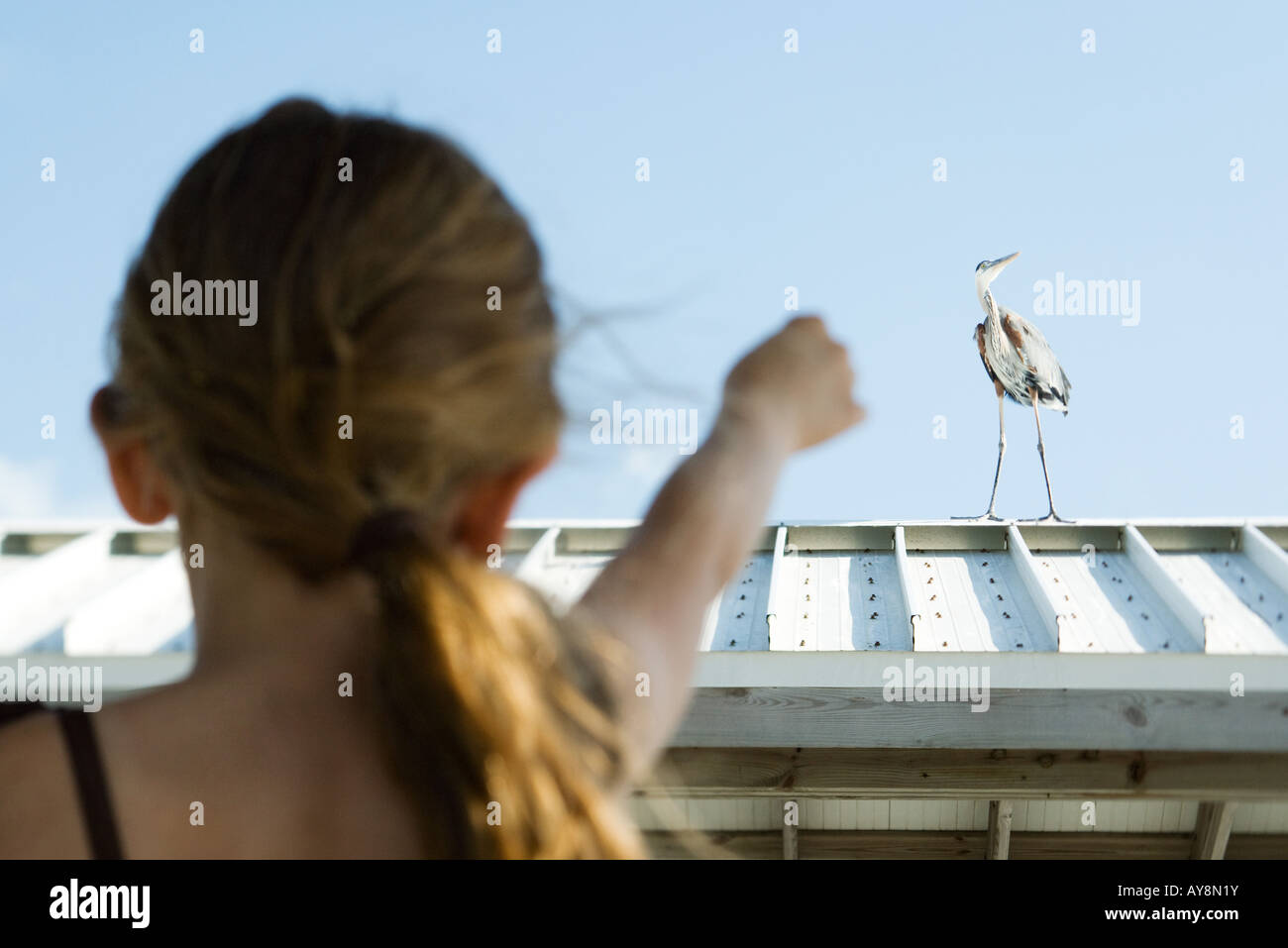 Little girl pointing at heron, rear view - Stock Image