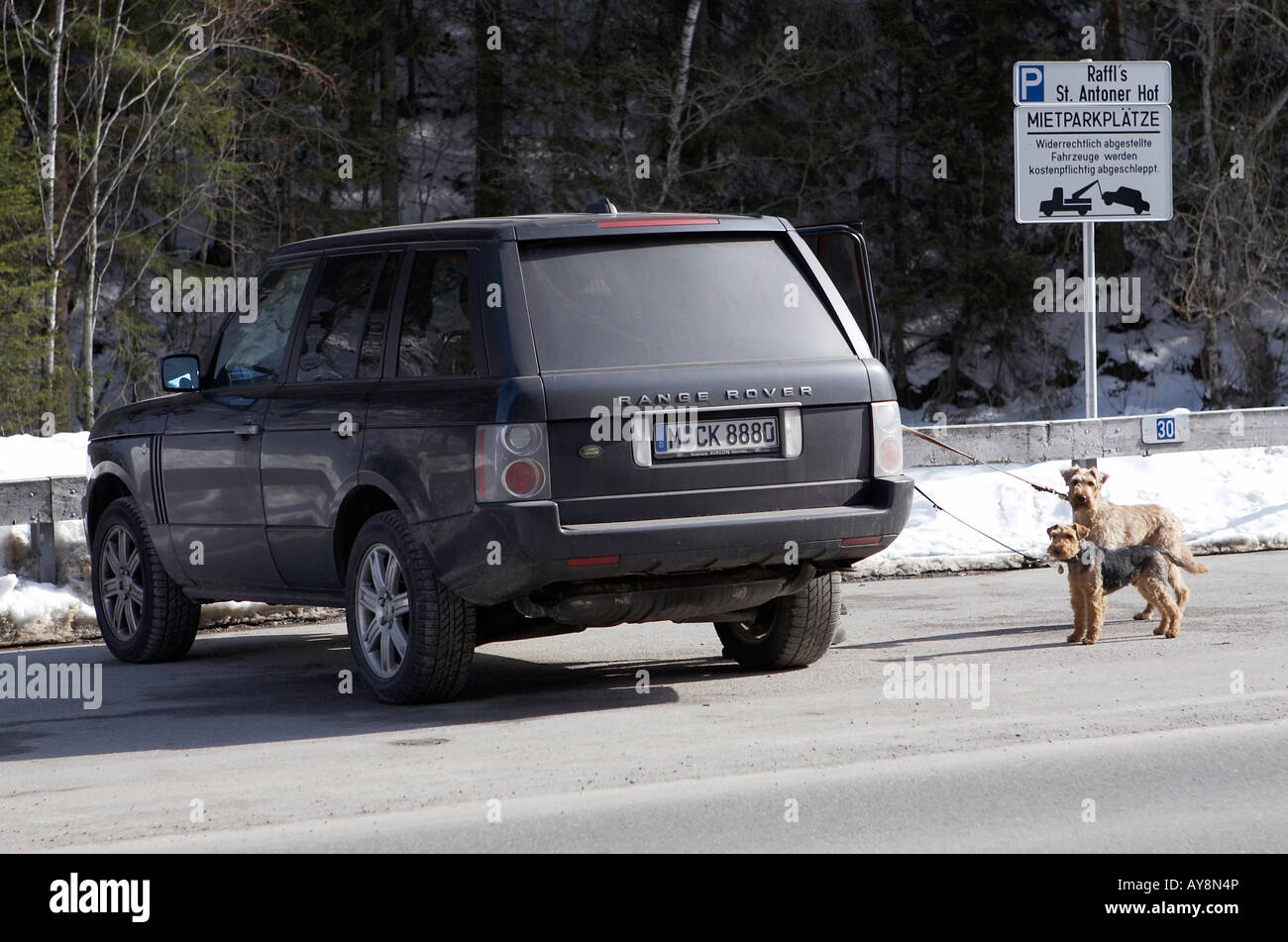 Four wheel drive car with two dogs. - Stock Image
