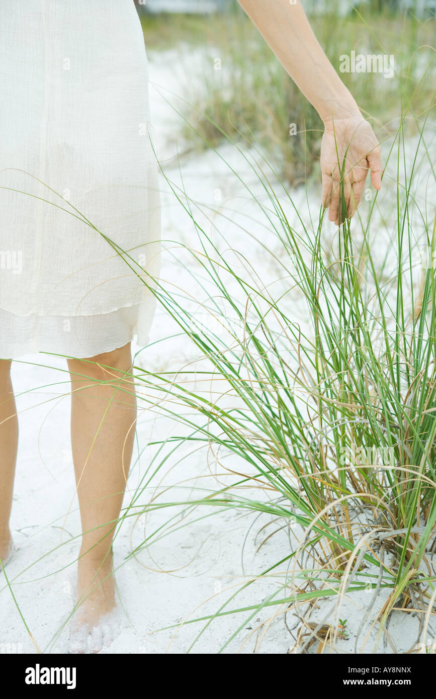 Female standing at the beach touching dune grass, cropped view - Stock Image