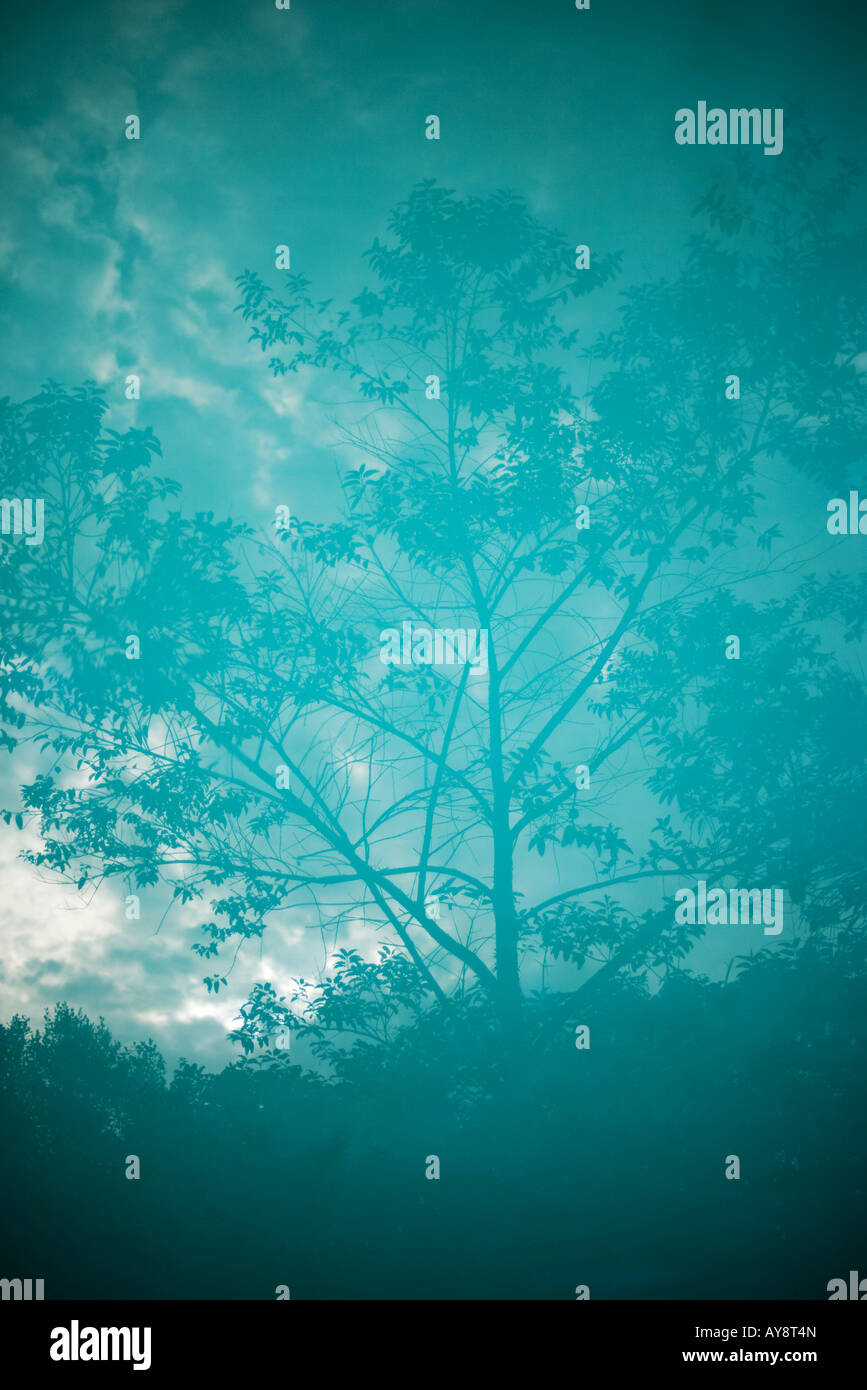 Tree reflected on surface of water - Stock Image