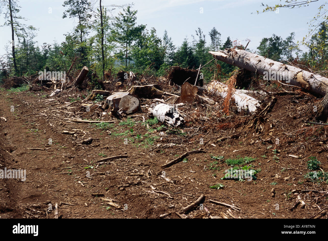 Clear-cut forest - Stock Image