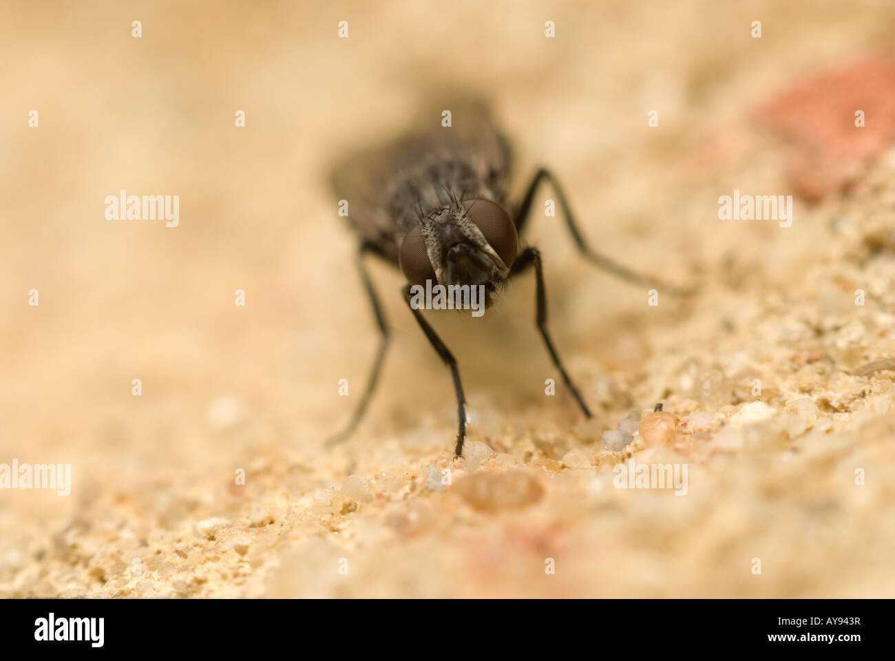Fly On The Wall Stock Photos & Fly On The Wall Stock Images - Alamy