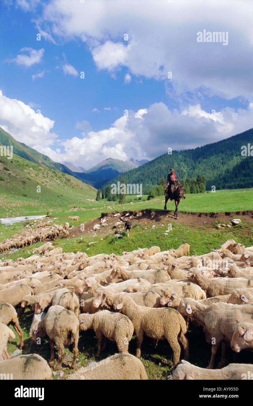 Shepherd on horse with his flock near Kara Kol Kyrgystan Central Asia - Stock Image