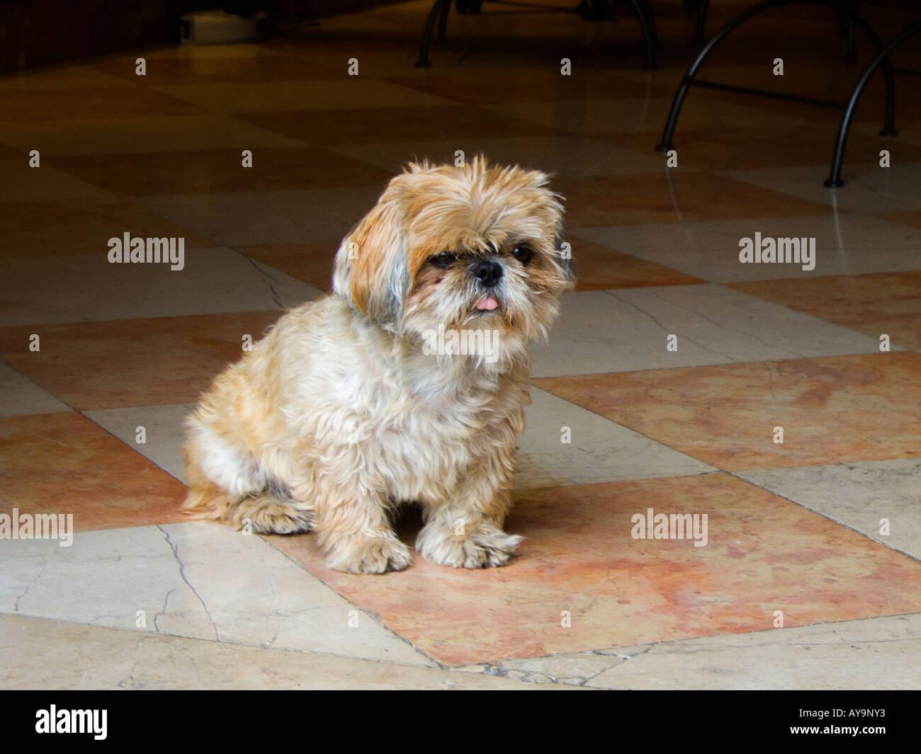 An old pet dog - Stock Image