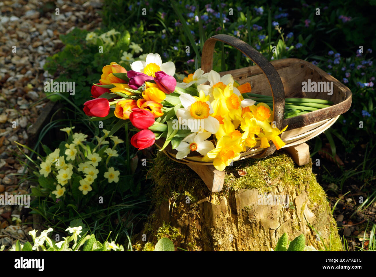 Spring Cut Flowers In A Wooden Garden Trug In An English Country