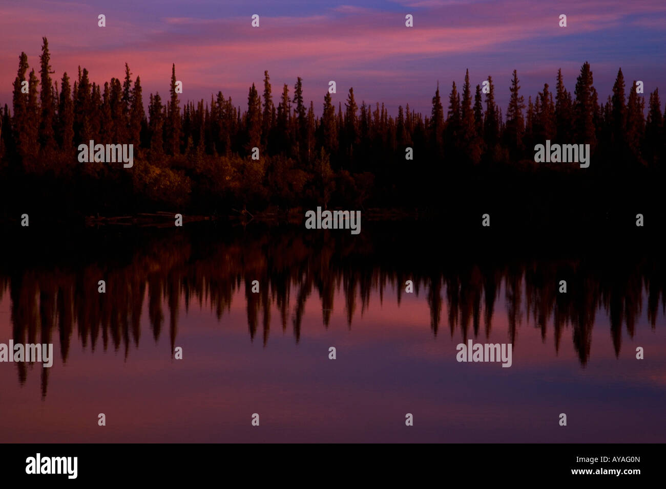 Trees reflected in water, NWT, Canada - Stock Image