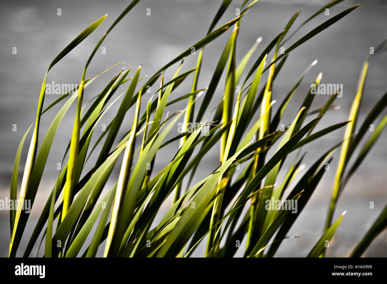 Closeup of blades of grass - Stock Image