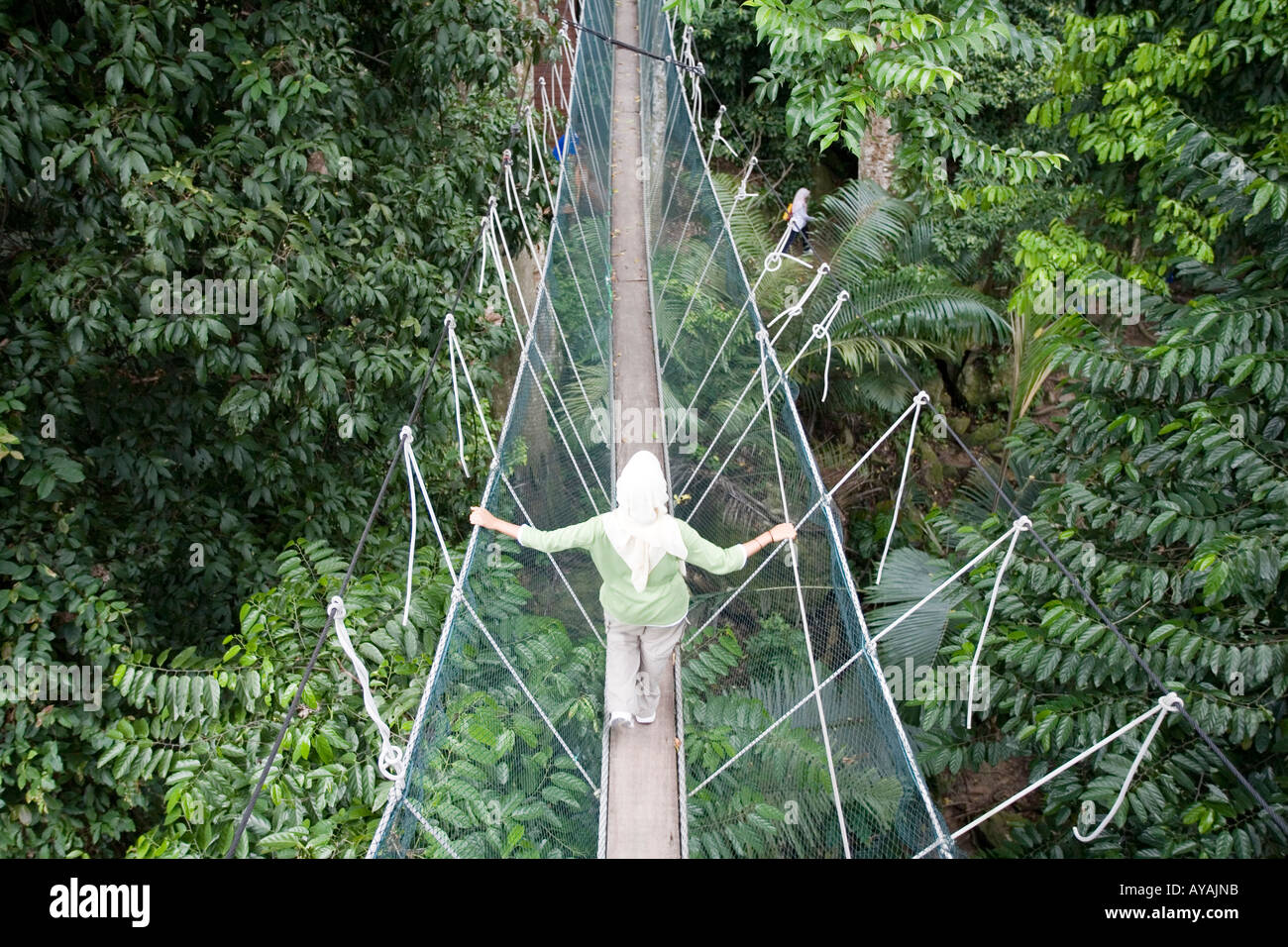 Malaysia Kuala Lumpur Rainforest Canopy Walkway Above Trees And Stock Photo Alamy