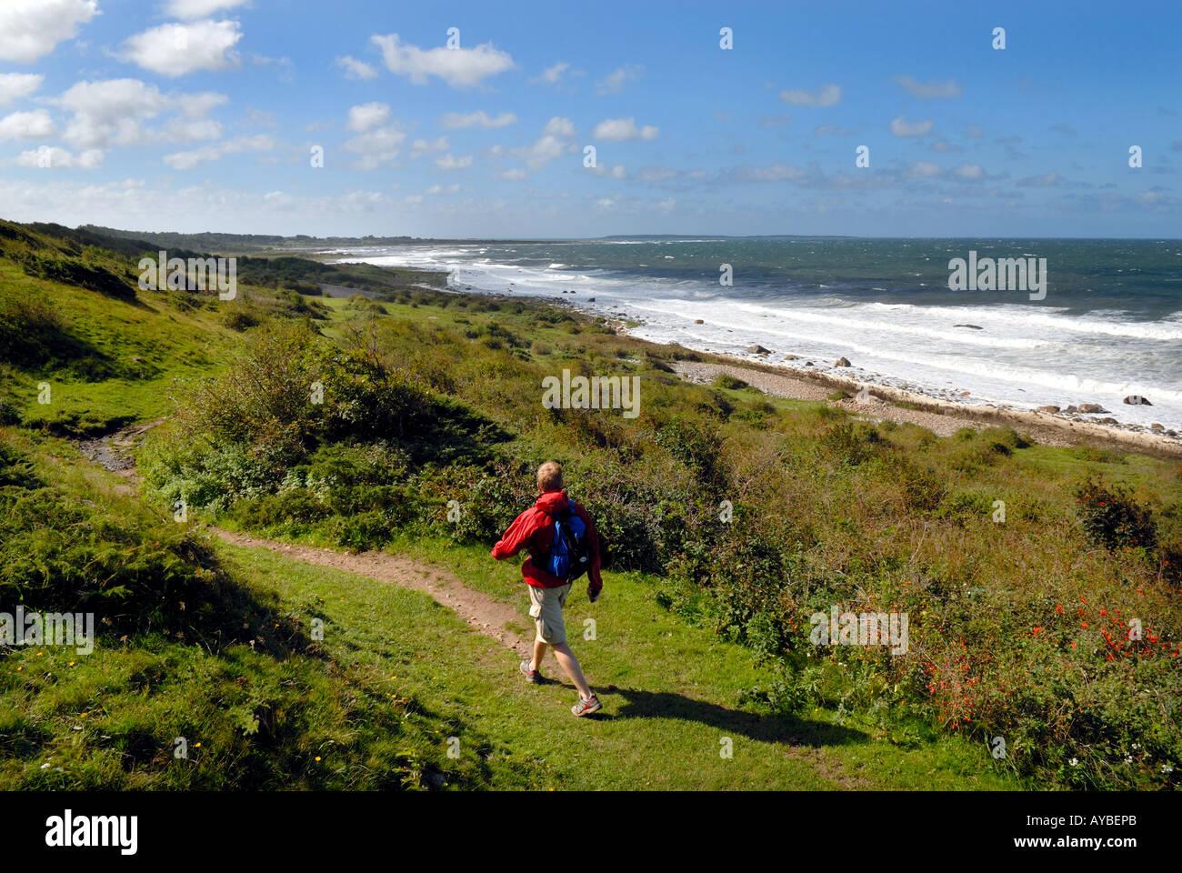 man hiking coastal section of Skaneleden Skane way long distance footpath Bjare Sweden - Stock Image