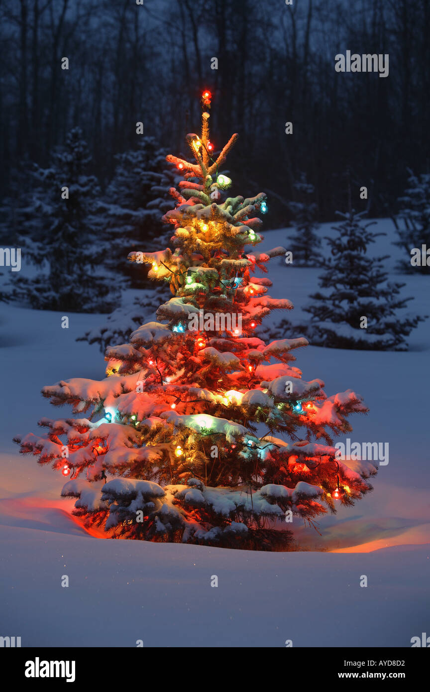 Christmas tree lights snow outdoor stock photos christmas tree christmas tree with lights outdoors in the forest stock image aloadofball Choice Image