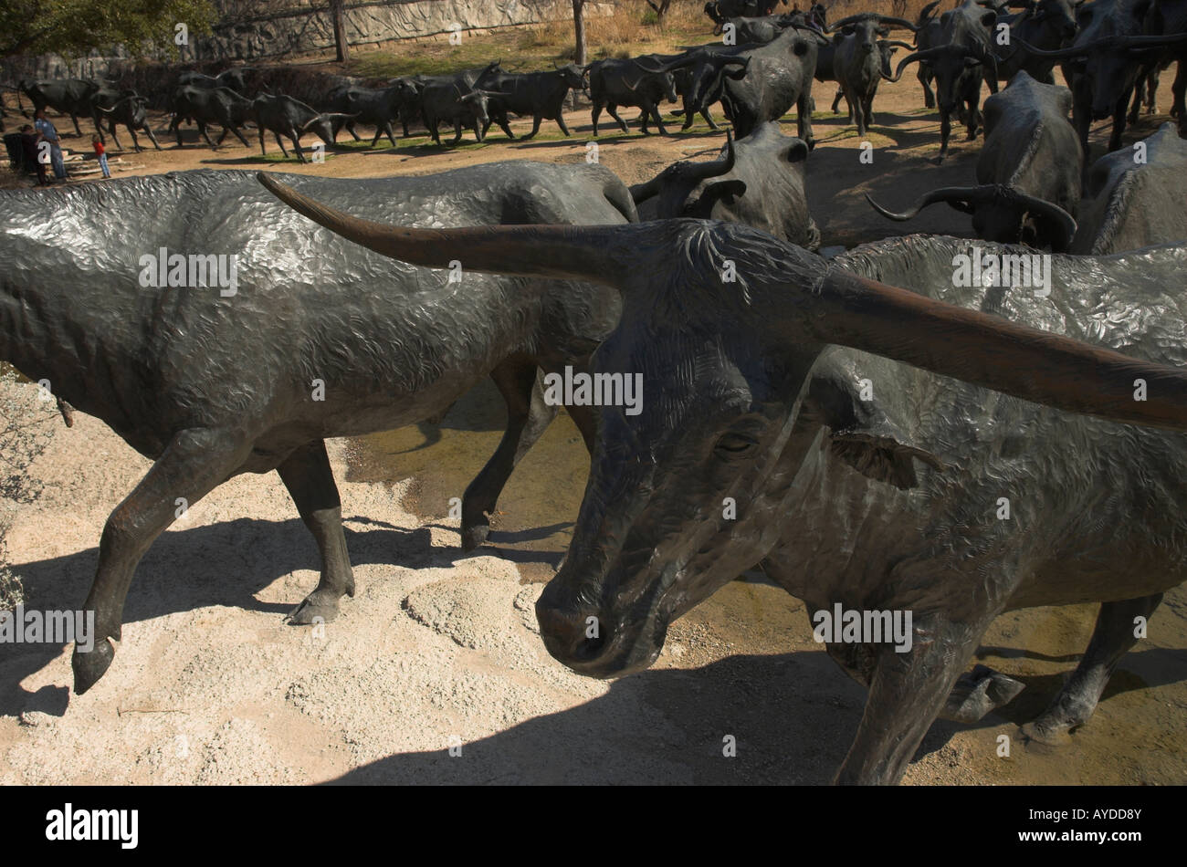 Statue of longhorn cattle in Dallas, texas - Stock Image