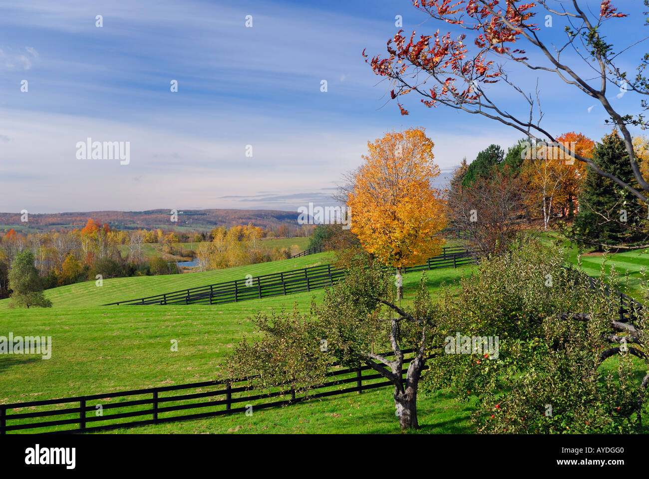 Grassy horse farm pasture land in Oak Ridges Morrain estate in Ontario - Stock Image