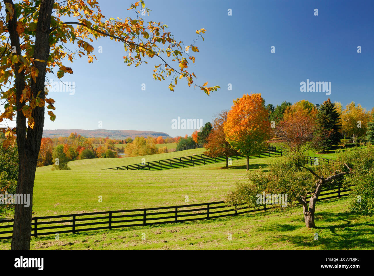 Horse farm Pasture and homestead in the Fall with Niagara Escarpment in Ontario - Stock Image