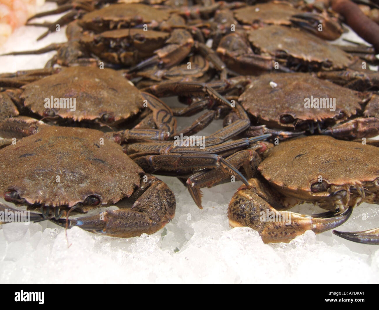 crabs for sale at fish market Stock Photo: 5574560 - Alamy