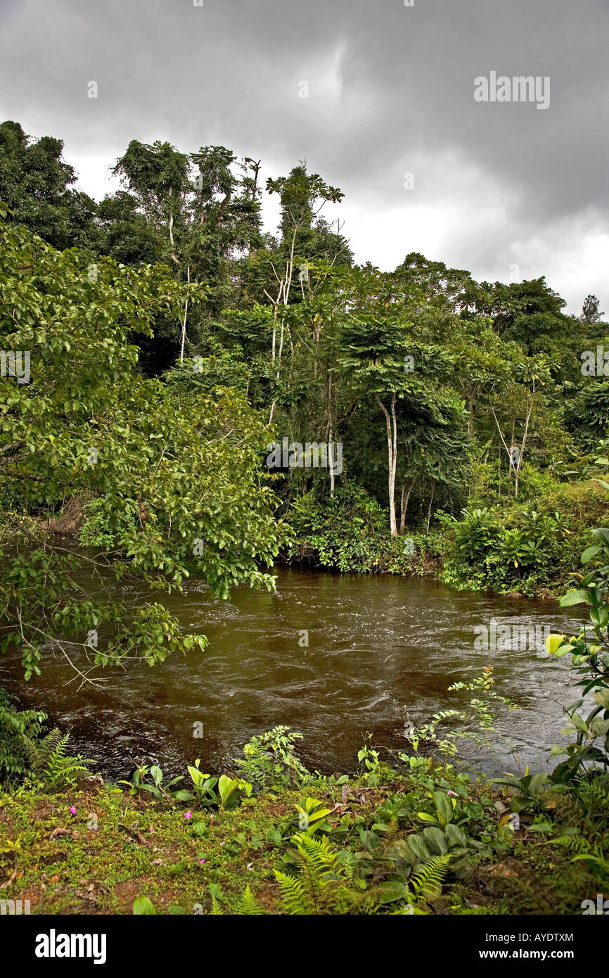 Tropical primary rain forest views with river, SE Gabon - Stock Image