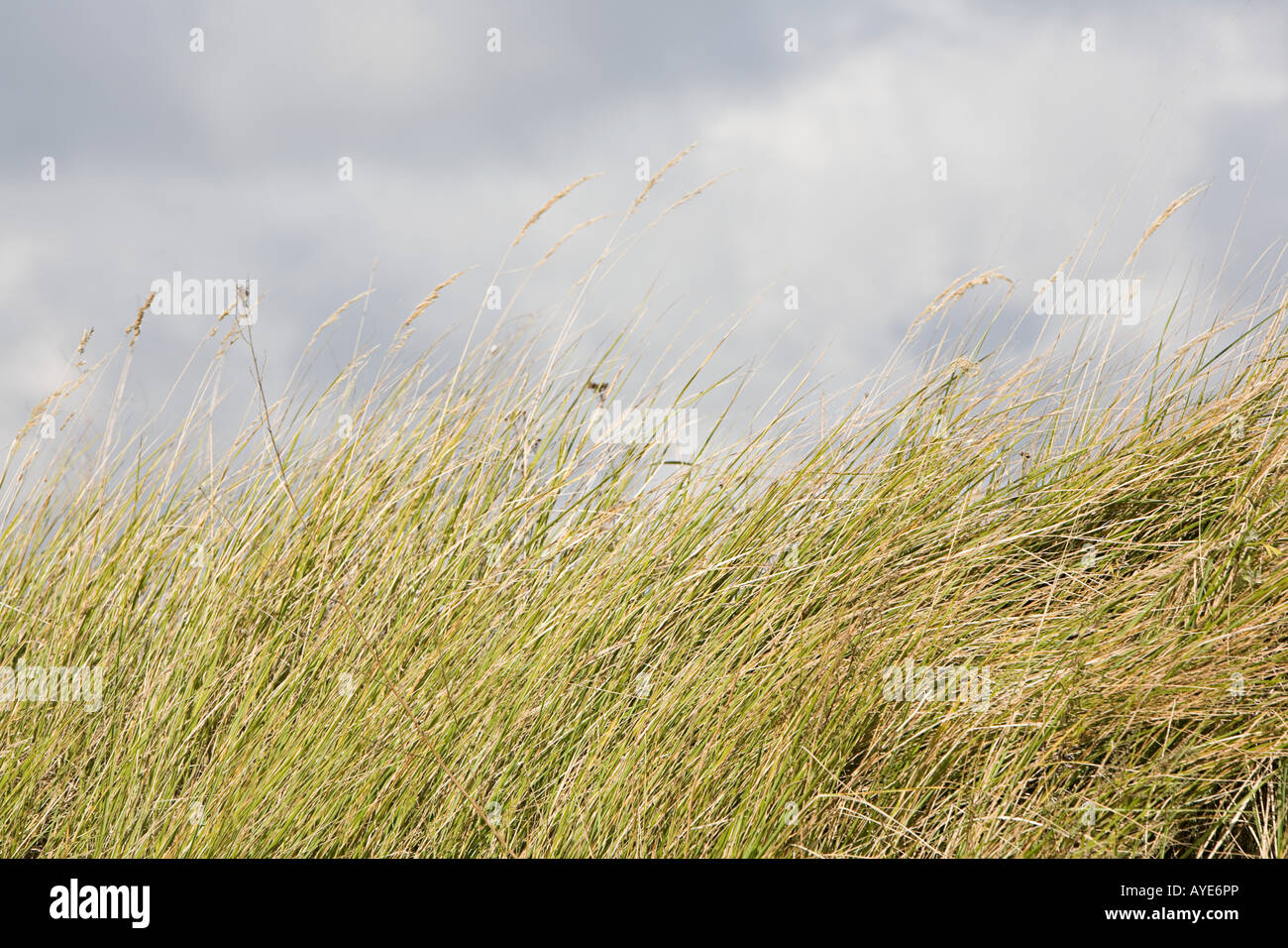 Clouds over marram grass - Stock Image