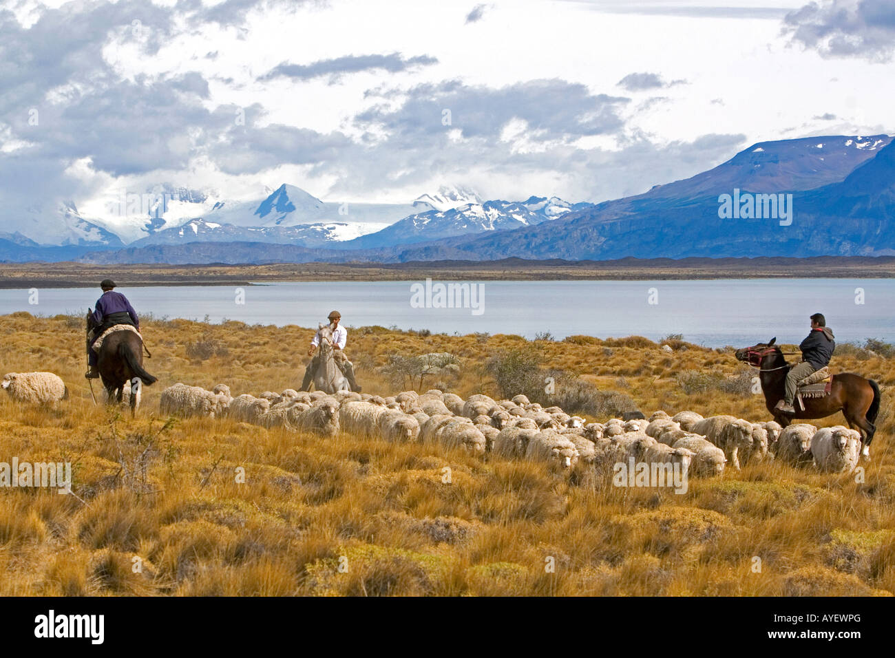 Gauchos herd sheep near Lake Argentino on the Patagonian grasslands near El Calafate Argentina - Stock Image
