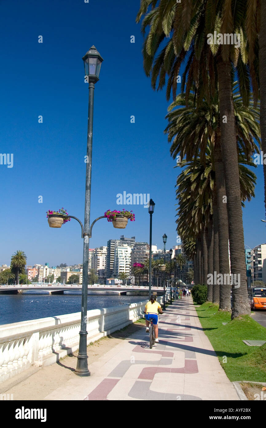 Sidewalk lined with palm trees at Vina del Mar Chile - Stock Image