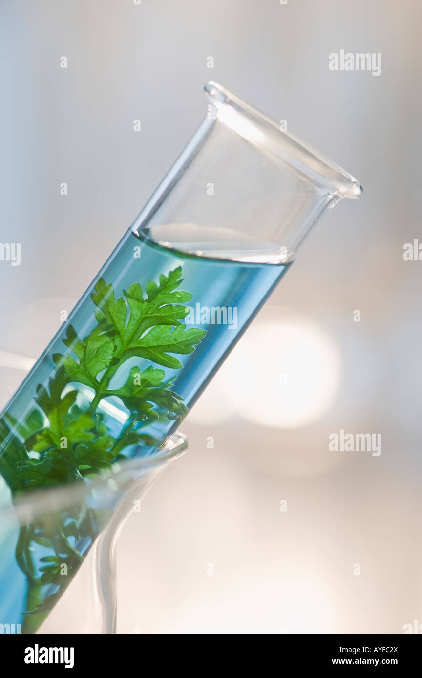 Plant and liquid in vial - Stock Image