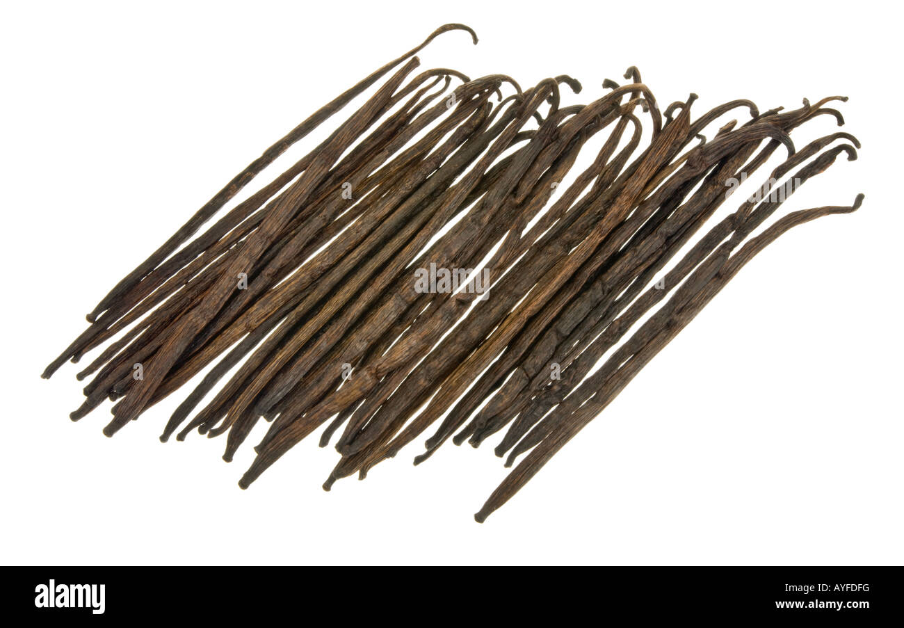 Vanilla beans pods stick real Vanille vanill of MADAGASCAR bundle much - Stock Image