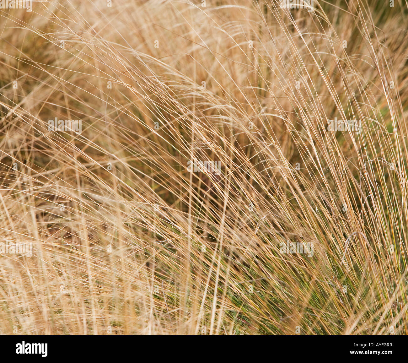 beach grass scene - Stock Image