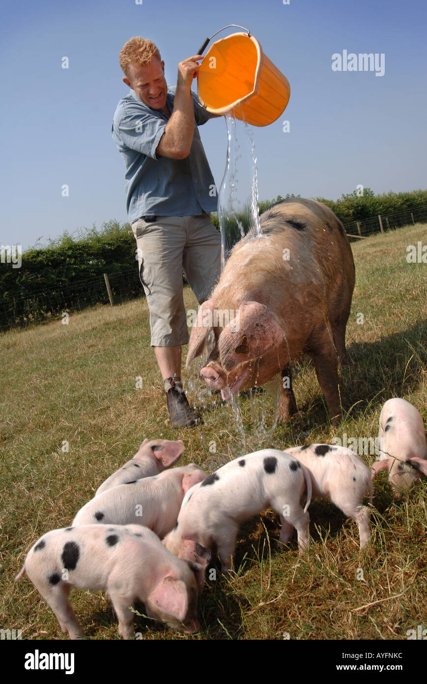 COUNTRYFILE TV PRESENTER AND OWNER OF THE COTSWOLD FARM PARK ADAM HENSON POURING A BUCKET OF WATER OVER A GLOUCESTER OLD SPOT PI - Stock Image