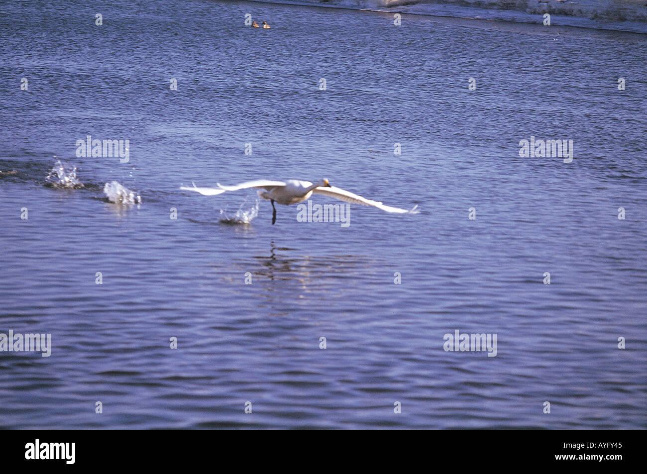 Bird Flying over Sea - Stock Image