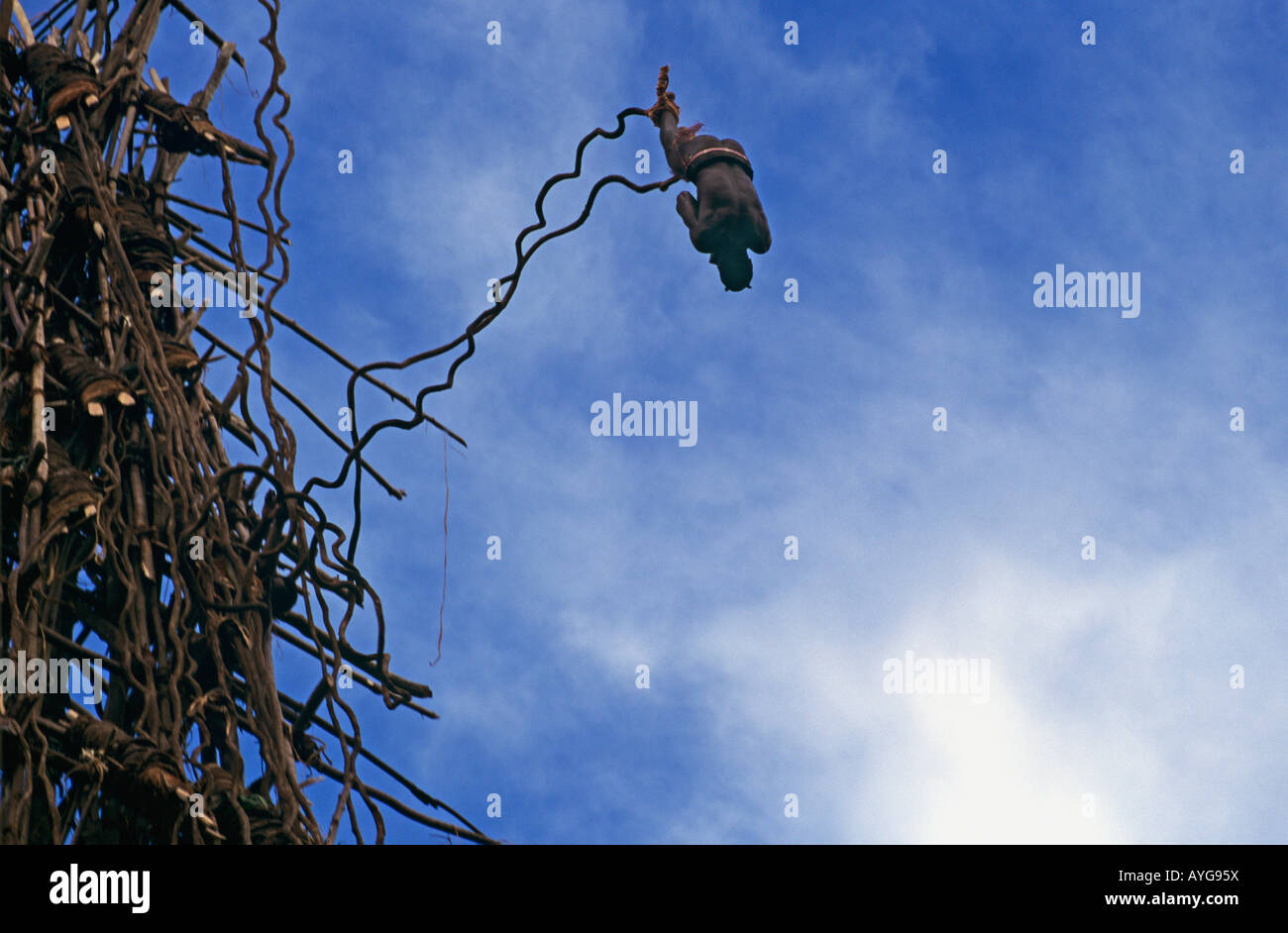 Land diver jumps from wooden tower tied only by vines to his ankles at Pangi on Pentecost Island in the Vanuatu - Stock Image
