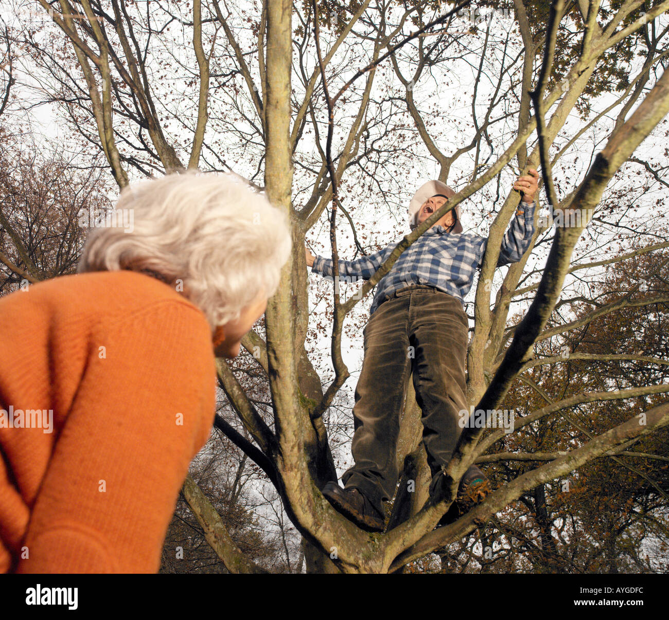 elderly male up a tree being watched by elderly female from below - Stock Image