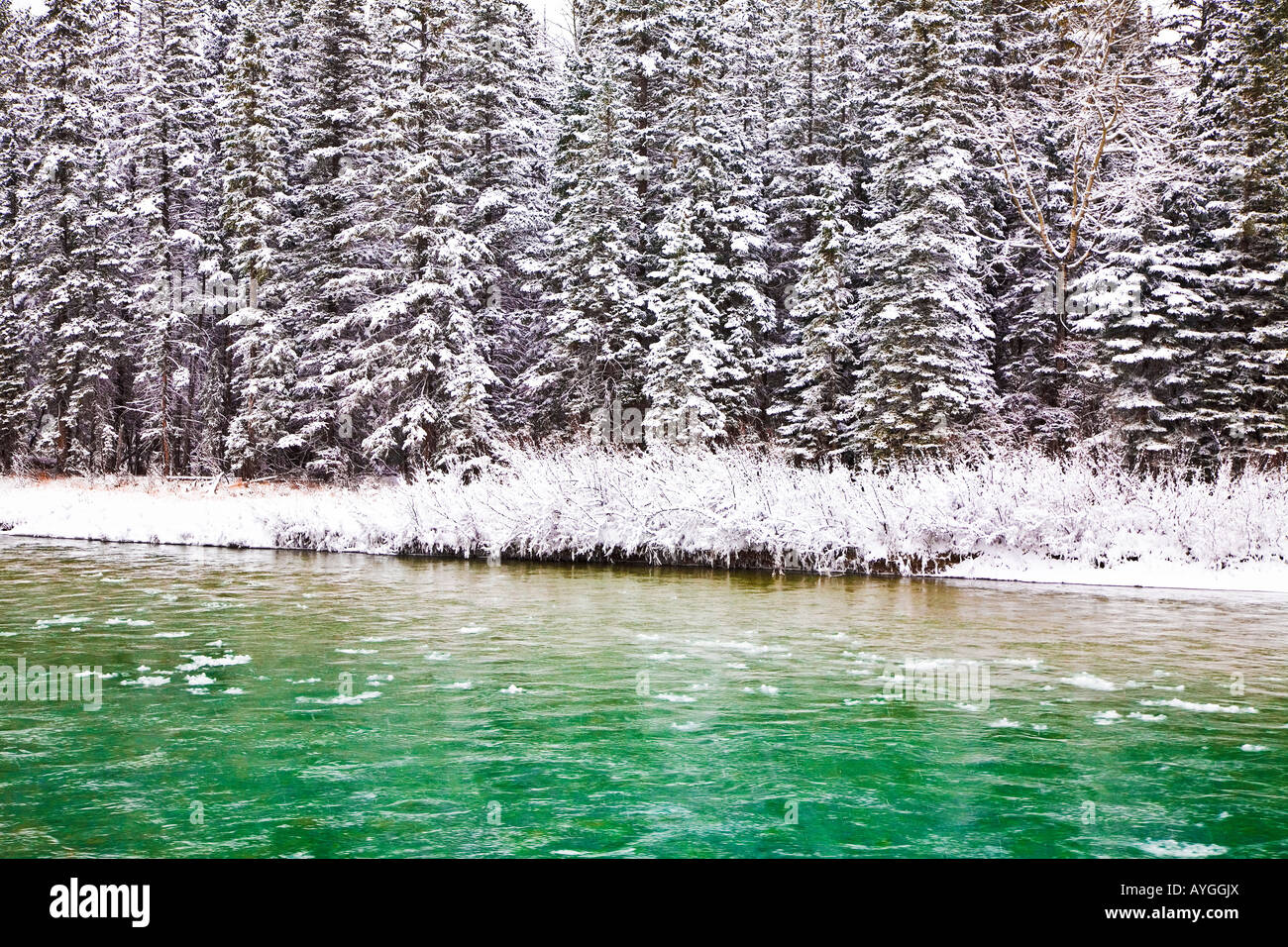 A tree-lined river in the winter Stock Photo
