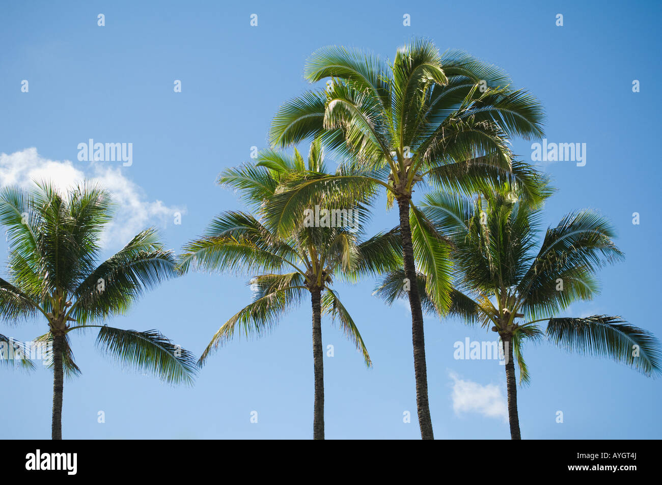 Low angle view of palm trees - Stock Image