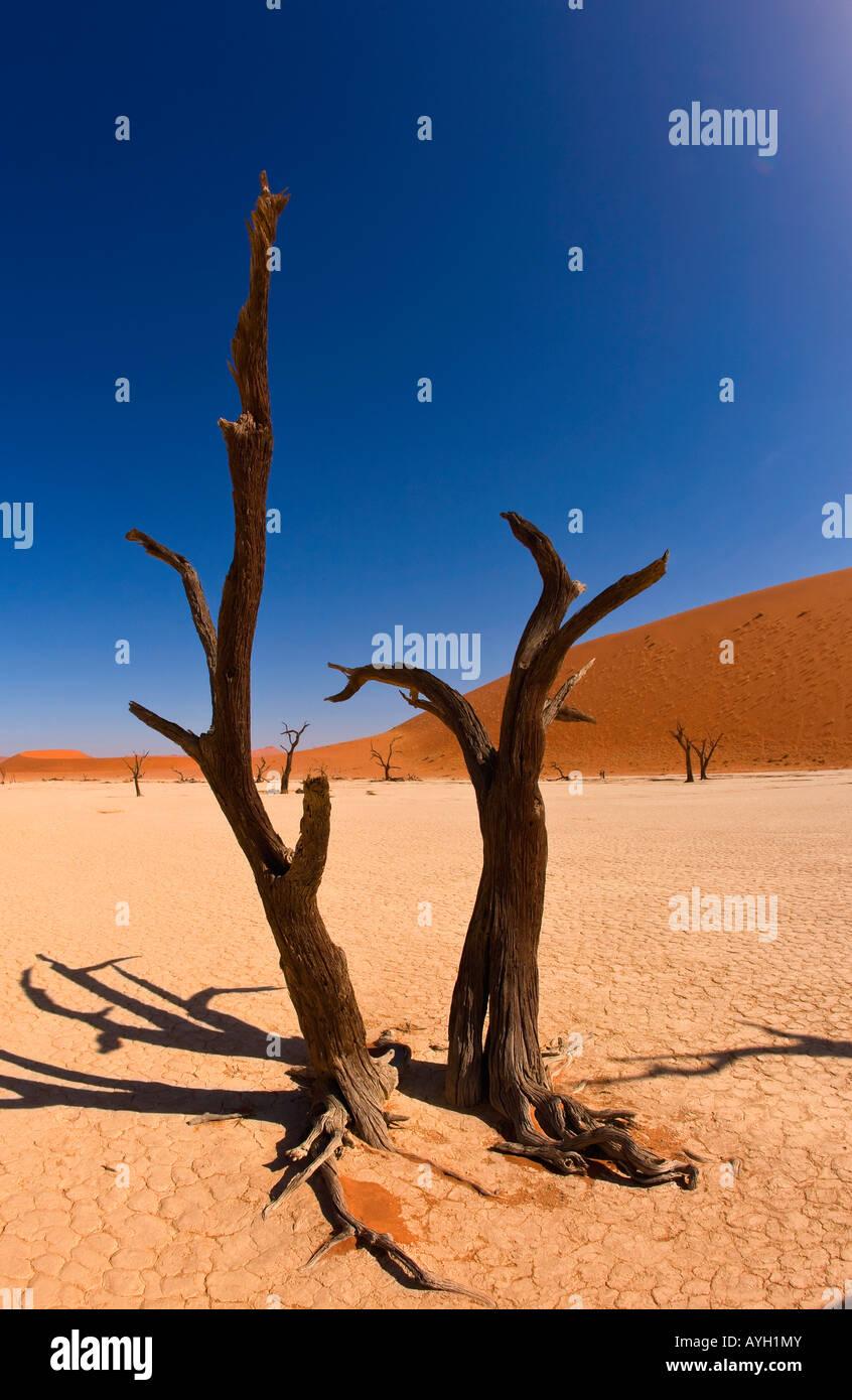 Dead trees, Namib Desert, Namibia, Africa Stock Photo