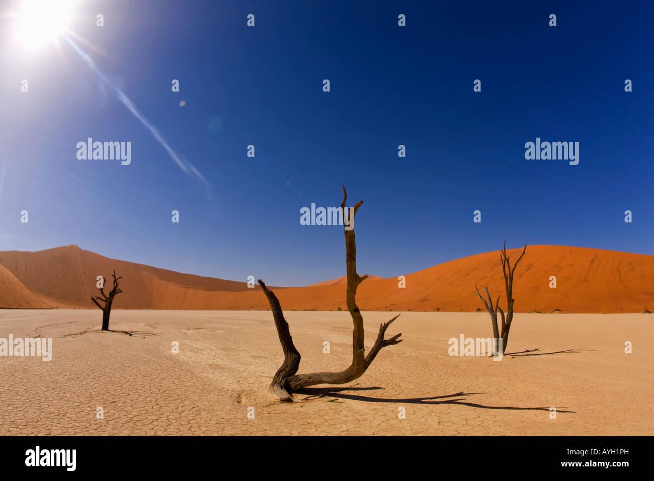 Dead trees, Namib Desert, Namibia, Africa - Stock Image