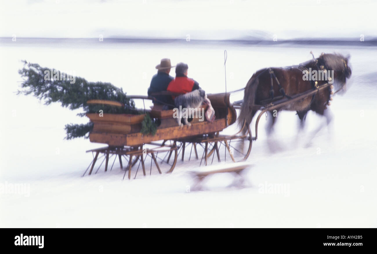 Blur Motion Of A One Horse Open Sleigh As A Couple Brings Home A