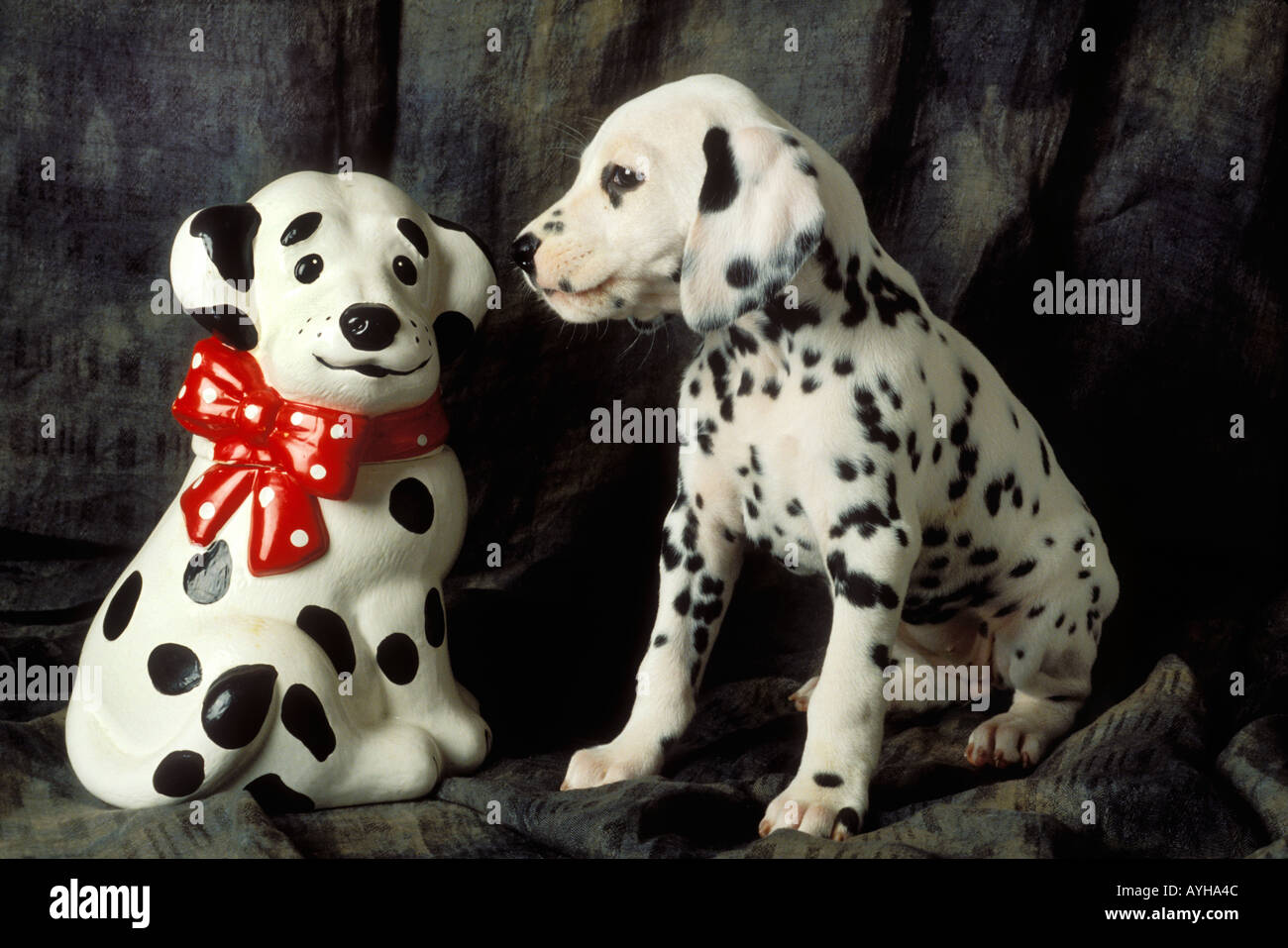 Dalmatian puppy with cookie jar - Stock Image