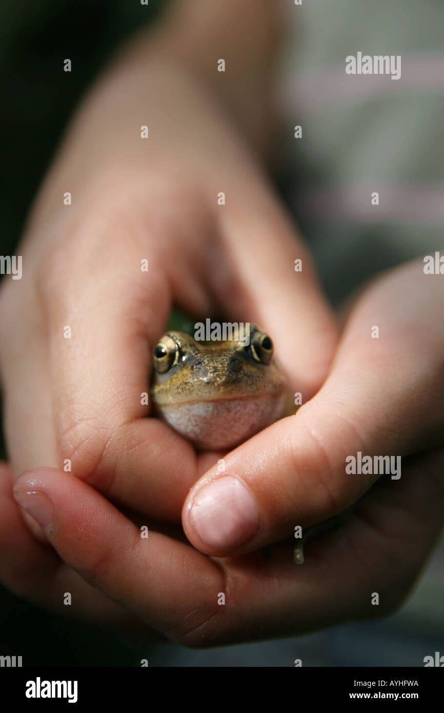 a child holding a frog - Stock Image