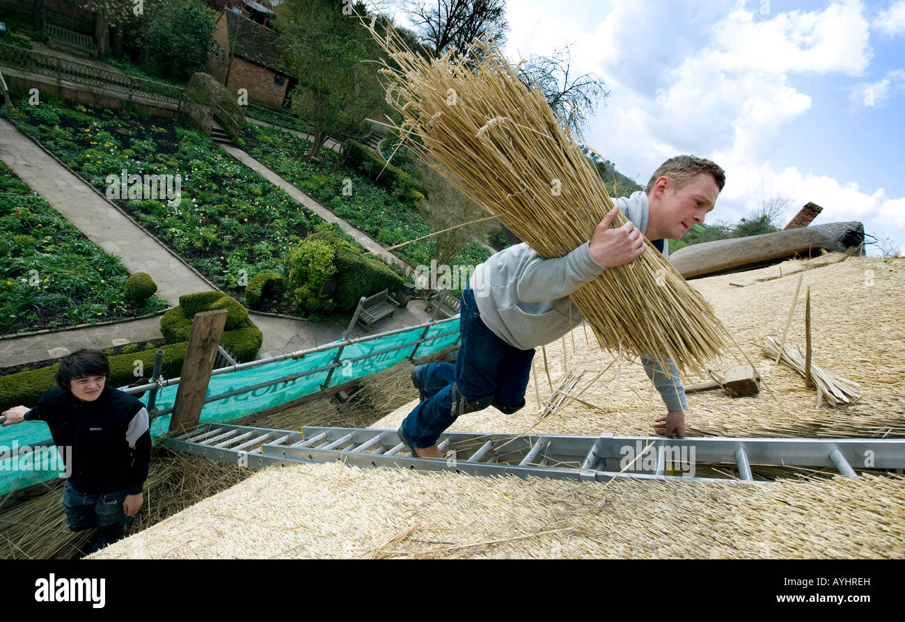 Master Thatcher James Caro (right) climbs with a bundle of thatching straw to repair the roof of Anne Hathaway's Stock Photo