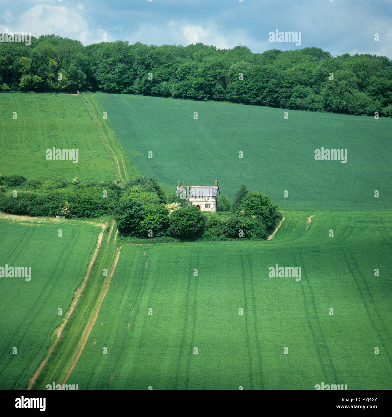 Seasons series of four fields at Vernham Dean Hampshire May green cereals - Stock Image