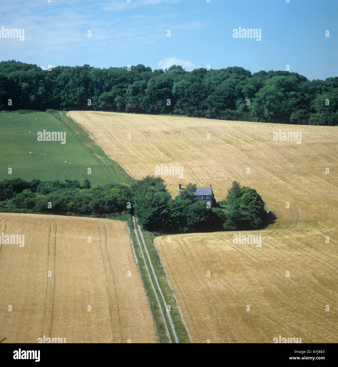 Seasons series of four fields at Vernham Dean Hampshire ripe barley July - Stock Image