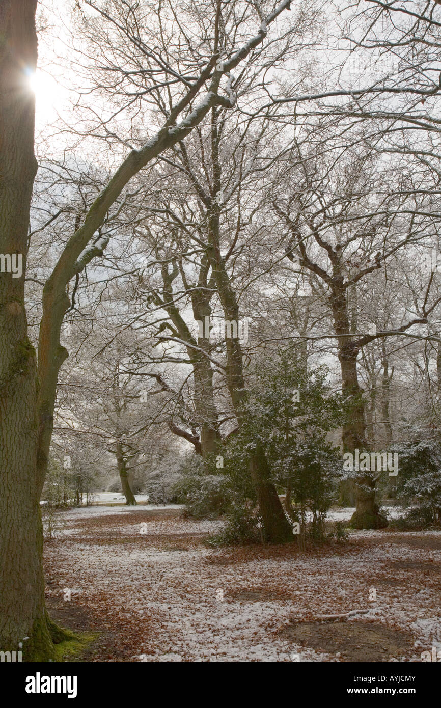 New Forest covered in winter snow - Stock Image