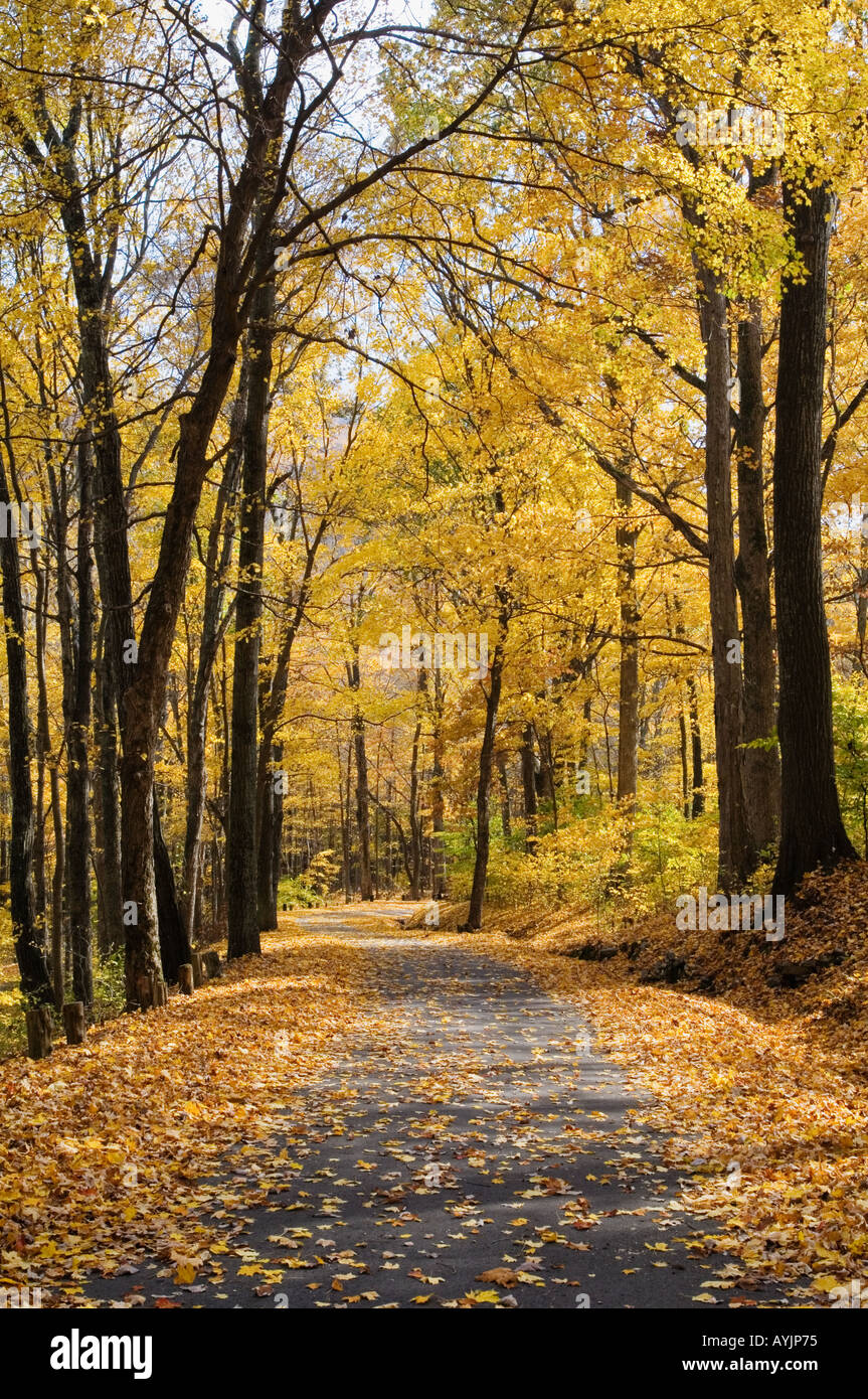 Road Through Autumn Forest O Bannon Woods State Park - Stock Image