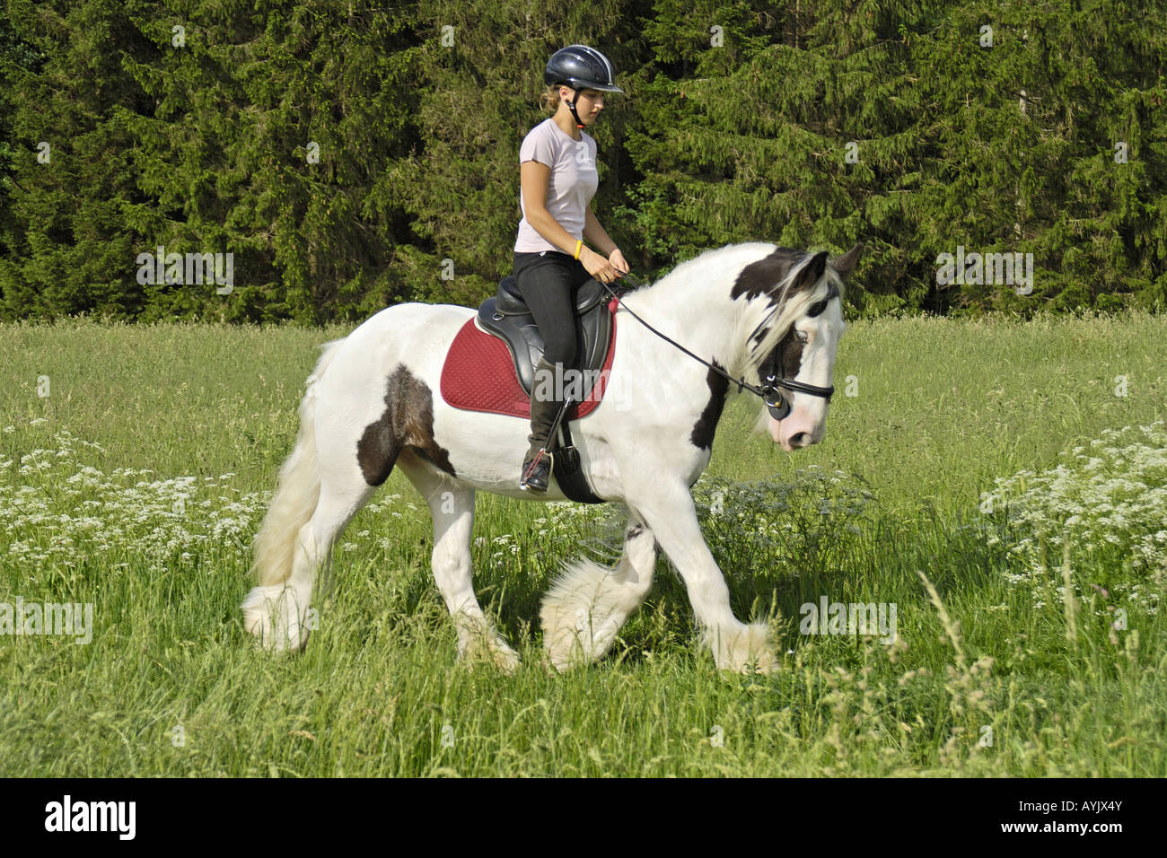 Girl riding on back of an Irish Tinker horse Stock Photo ...