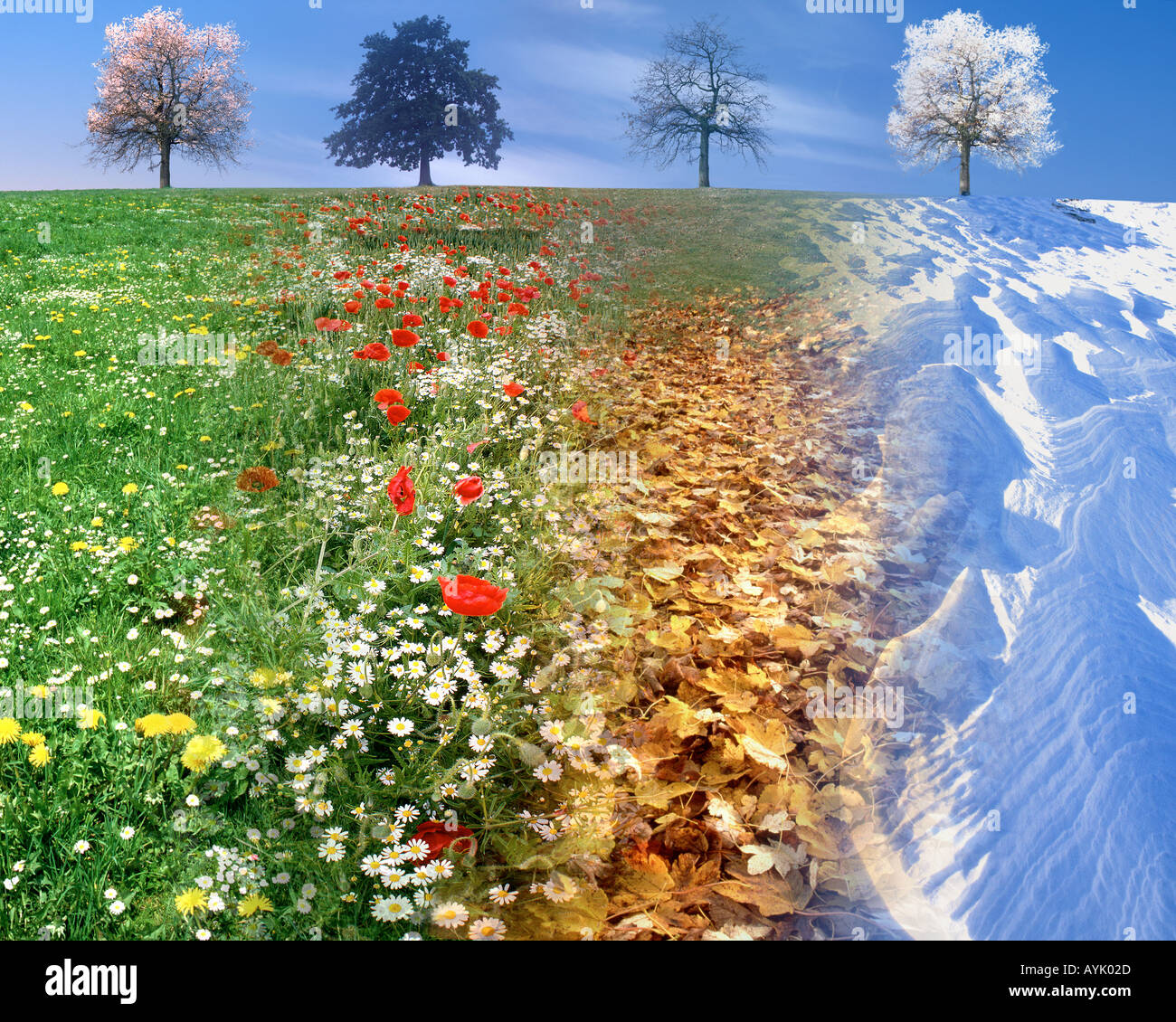 CONCEPT PHOTOGRAPHY: The Four Seasons combined in one image - Stock Image