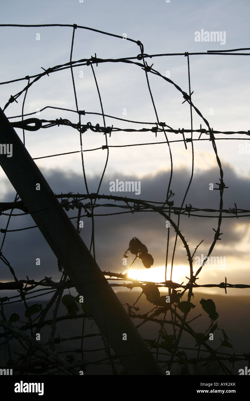 brambles and barbed wire fence in countryside Stock Photo: 17126598 ...