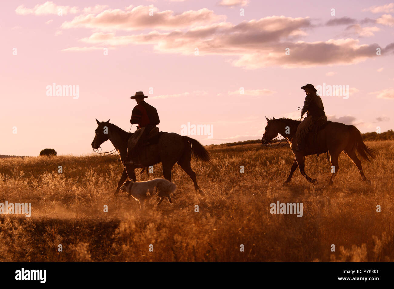 Cowboys on Quarters Horses (Equus caballus) trooting over the praerie in evening light accompanied by a dog - Stock Image
