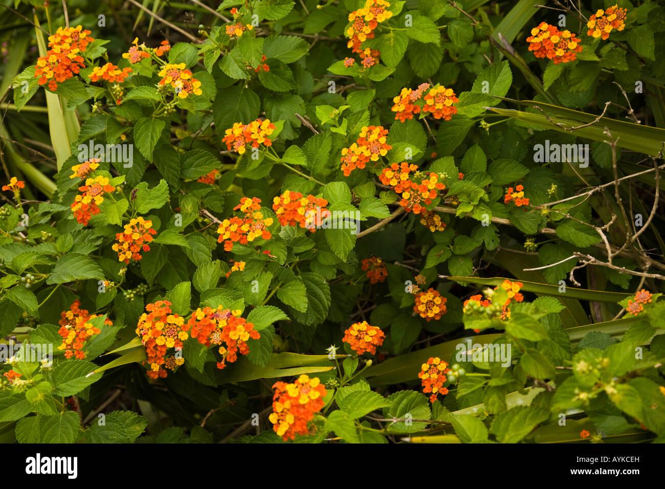 Yellow Wild Flowers In Florida Usa Stock Photo 17129896 Alamy