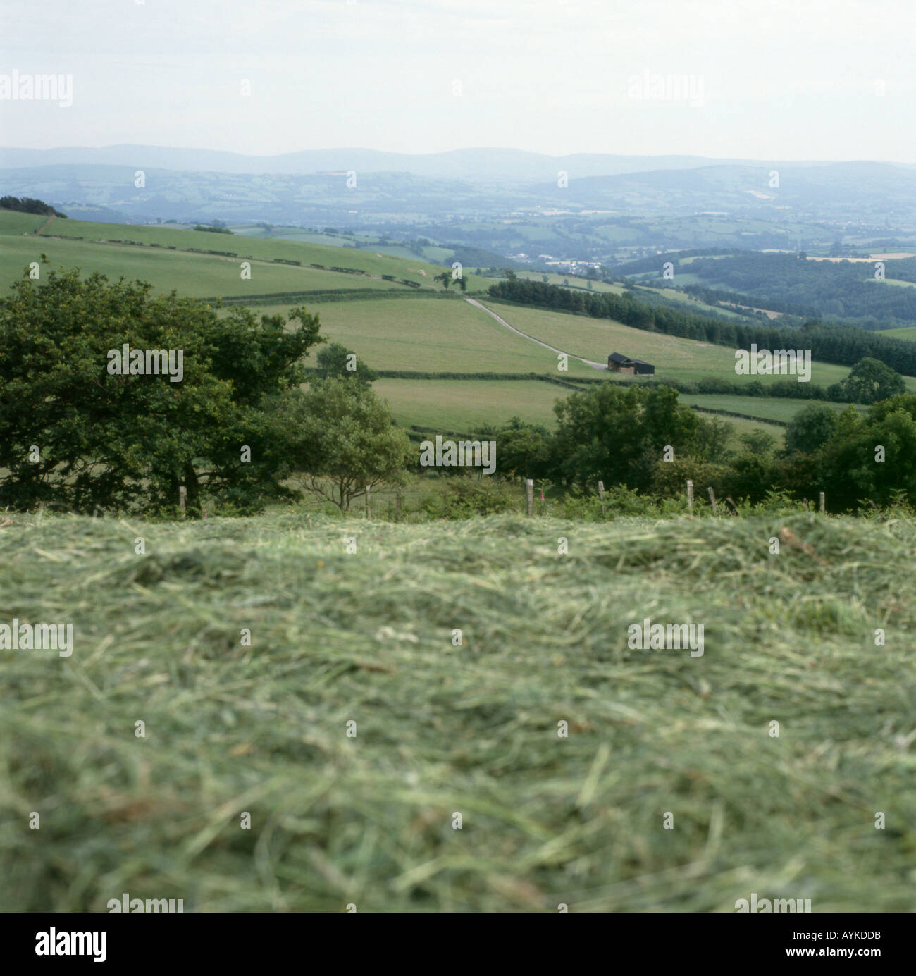 Field of mown hay on a farm in summer and June landscape near Llanwrda Carmarthenshire Dyfed Wales UK  KATHY DEWITT - Stock Image