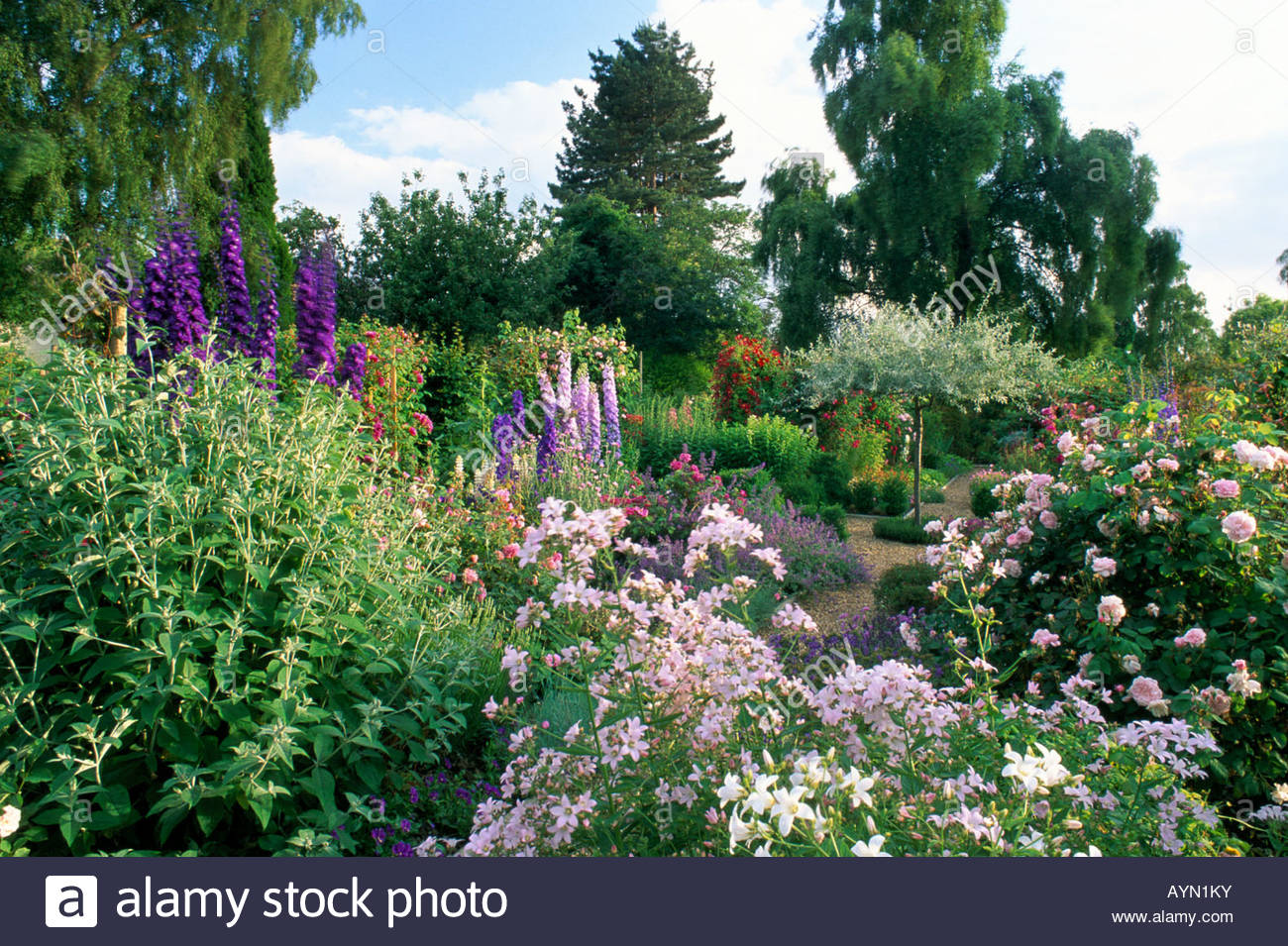 The anchorage kent rose garden underplanted with perennials rosa fantin latour campanula weeping pear tree pyrus salicifolius